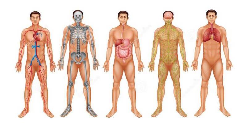 25 معلومة عن جسم الإنسان ستدهشك