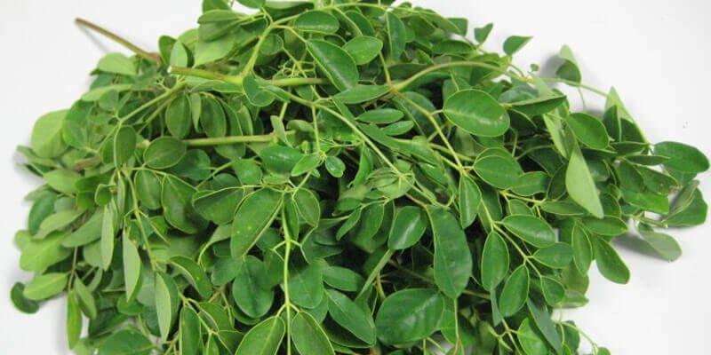 7 من فوائد نبات المورينجا وطريقة استخدامه صحة أفضل بدون آثار جانبية