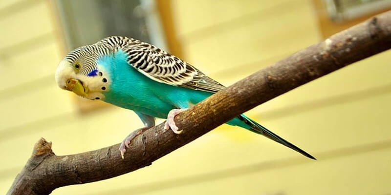 5 أسباب لعدم تغريد عصافير الكناري تعرف عليها