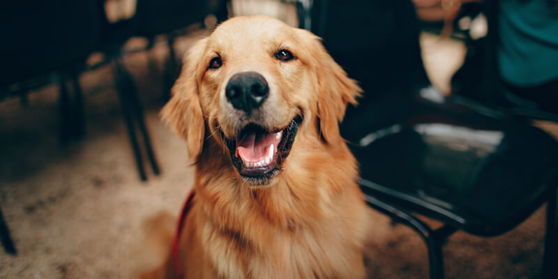 9 من أنواع الكلاب المختلفة